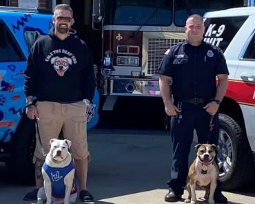 Two Pit Bulls Vying for American Humane Hero Dog Awards