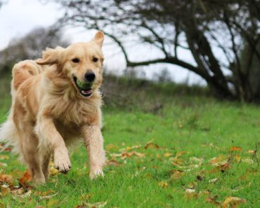 The History of Search and Rescue Dogs