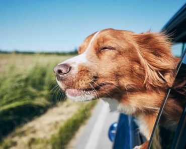 Dog Dies After Woman Locks It in Hot Car as Punishment