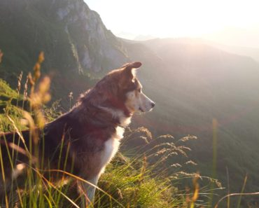 Dog Missing in Mountains for Five Days Reunites With Owner