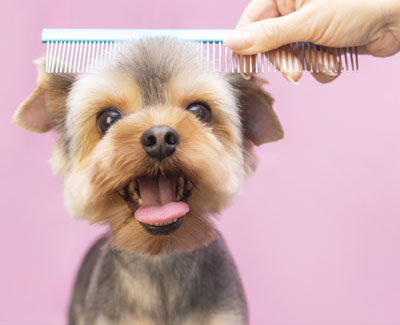 Dog being groomed by groomer