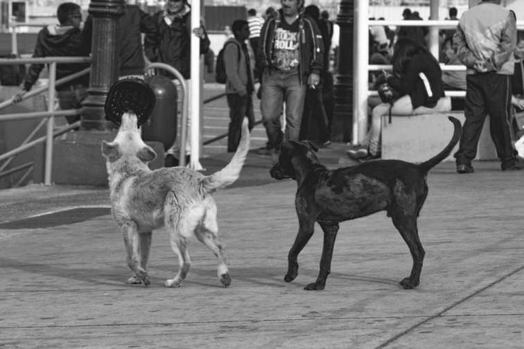 Photo of Stray Dogs Playing in Valparaiso