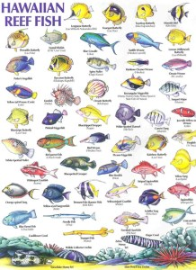 Hawaiian Reef Fish Guide