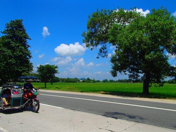 学校の周りの田んぼの写真