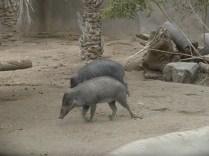wort hogs
