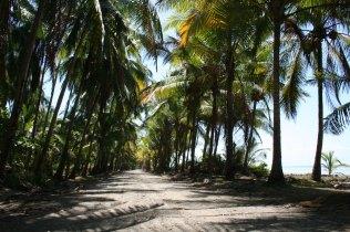 playa-bejuco-2