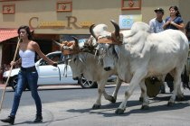 costa-rica-ox-cart-parade-atenas-5