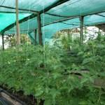 Hacienda Okhra Project
