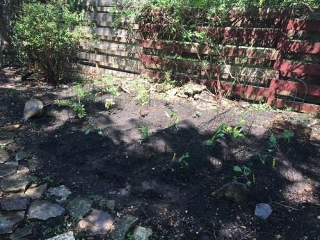 Central Texas garden
