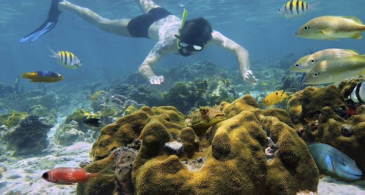 Discount: Snorkeling Tour and Rainforest Hike (Cahuita)