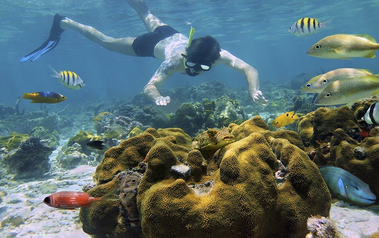 Snorkeling tour and rainforest hike