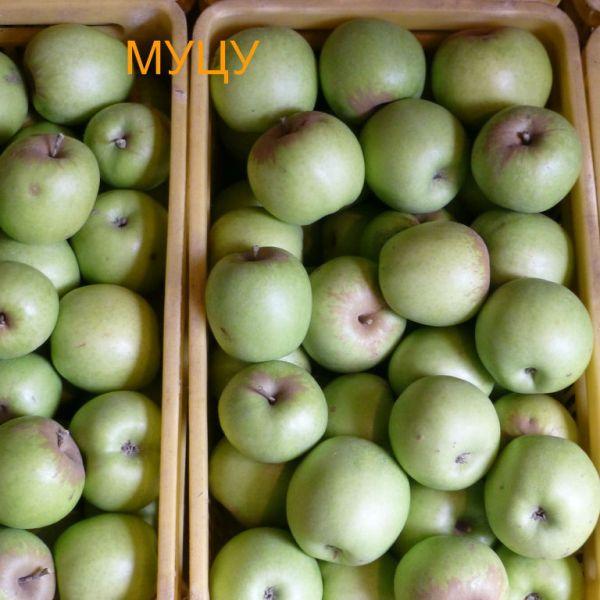 ябълки - Муцу