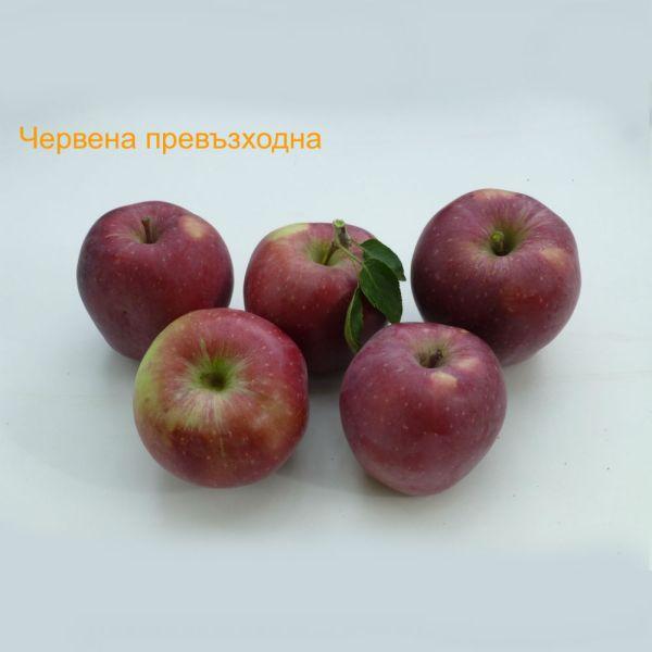 ябълки - Червена