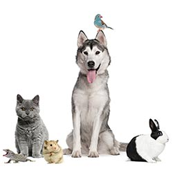 Online Pet Business For Sale | Pure-Ecommerce