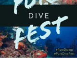 Pure Dive Fest 2019 Flyer