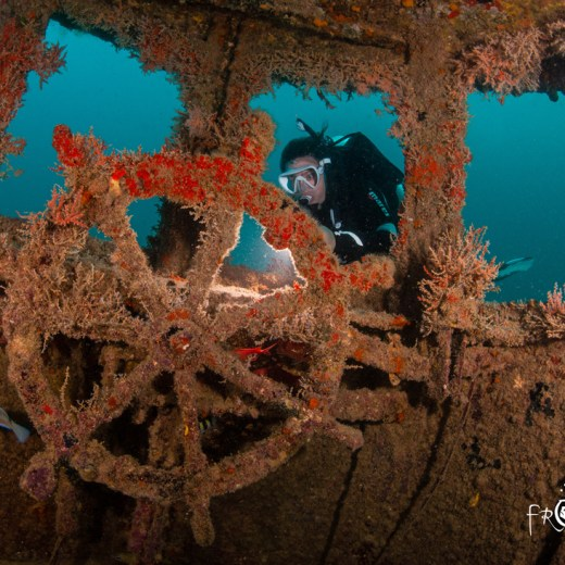 Scuba diver on a Grenada wreck at Pure Dive Fest