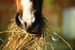 horse-1074867_960_720