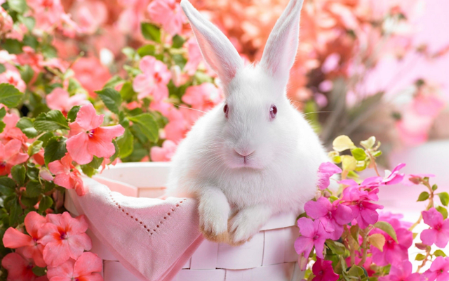bunny-pink-background