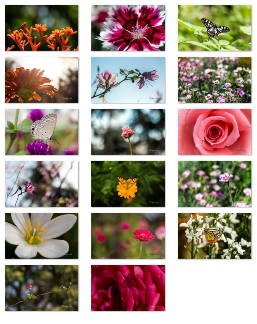 Garden Glimpses 4 wallpapers