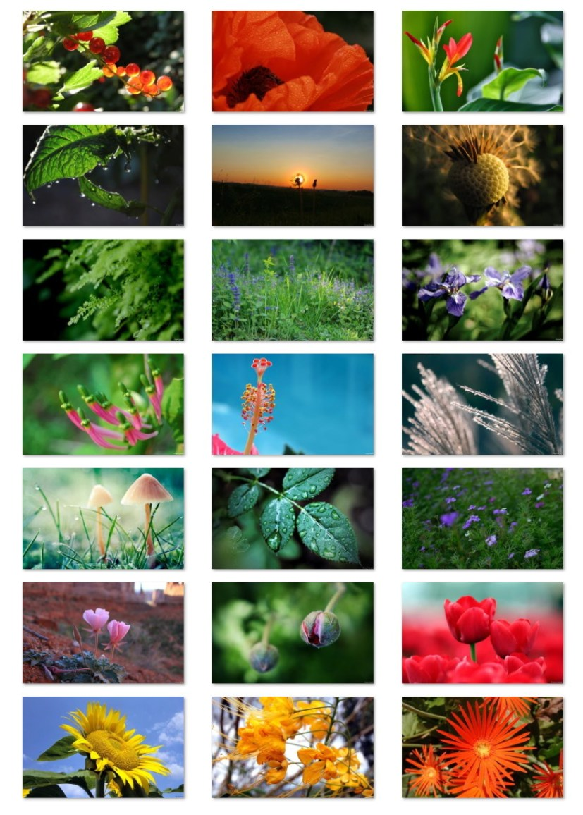 Flora wallpapers for Windows