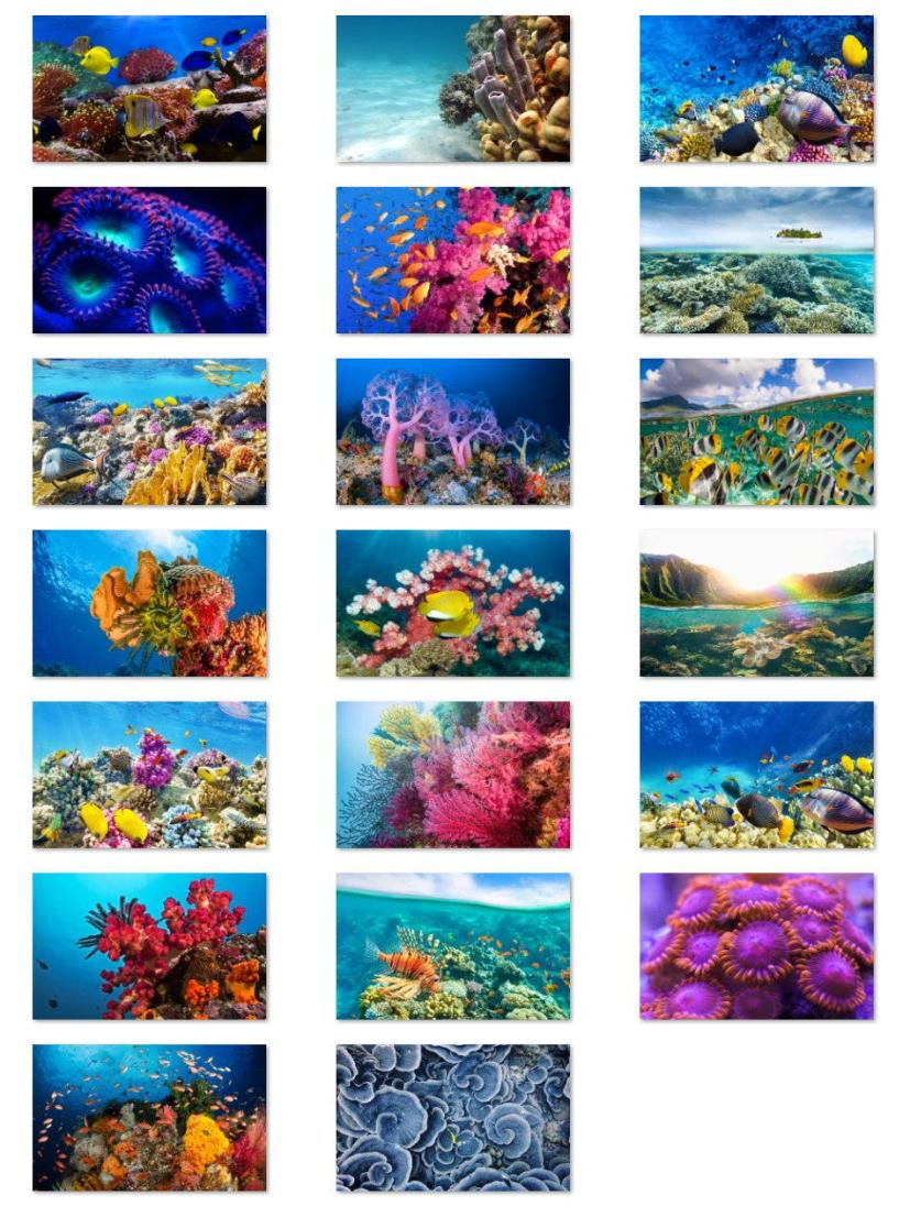Fish and Corals wallpapers for Windows 10
