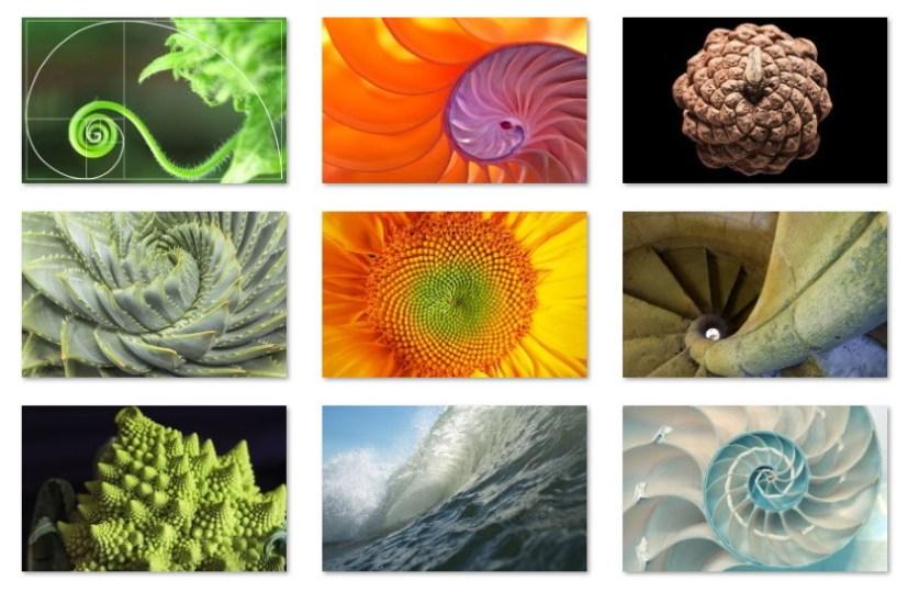 Fibonacci Sequence Nature wallpapers