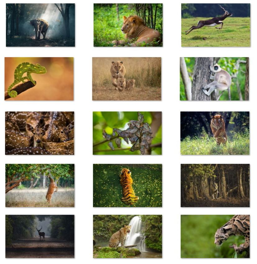 Wildlife of India wallpapers