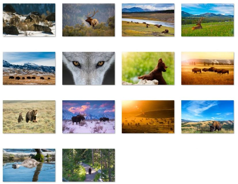 Animals of Yellowstone wallpapers