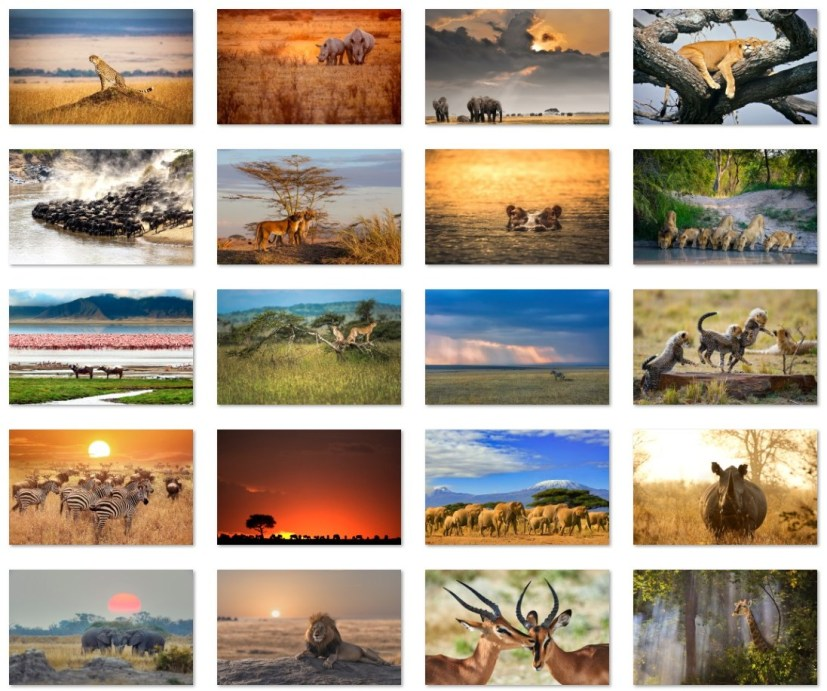 African animals wallpapers