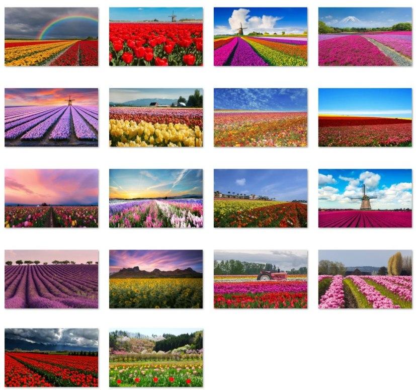Fields of Flowers wallpapers