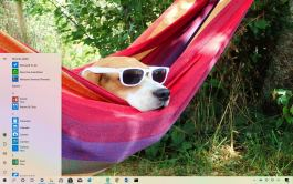 Dogs In Shades theme for Windows 10
