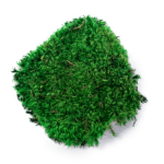 features_ProvenceMoss-GreenMood-250x231