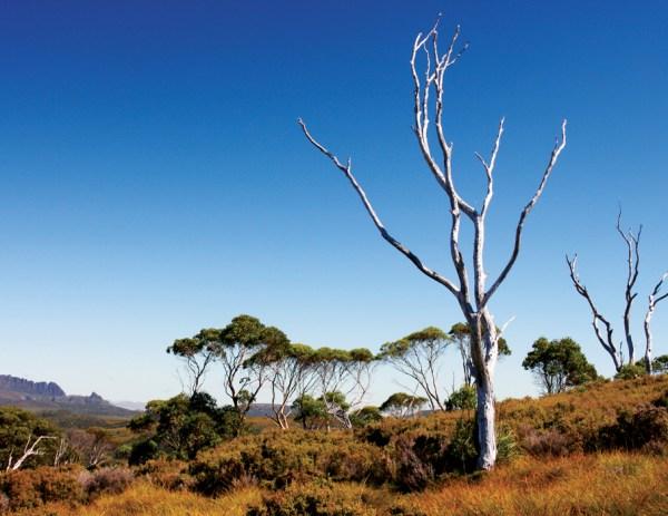 世界遺產之旅 塔斯馬尼亞荒原