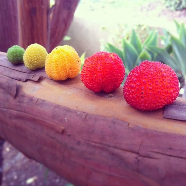 Strawberry Tree LandArt