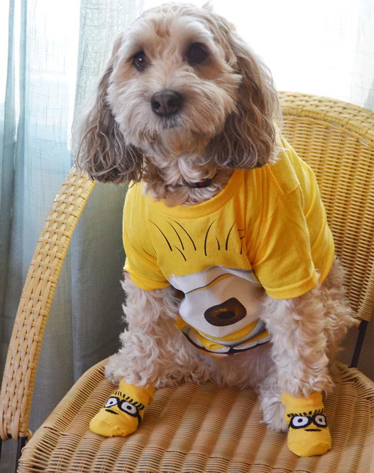 dog minion costume