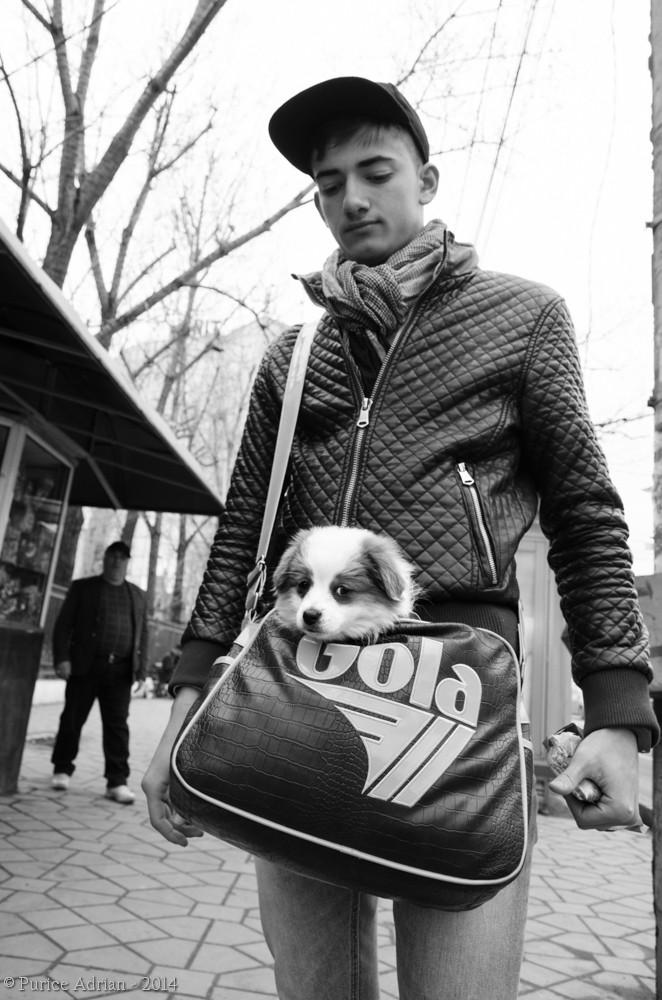 dog in a boy's bag