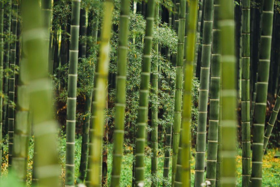 Baking Soda is sooo 2017 | Try Bamboo Charcoal Air Purifier Bags
