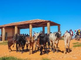 Viehmarkt in Ambalavao