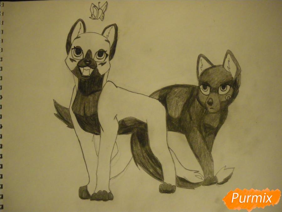 biely péro čierna mačička videá