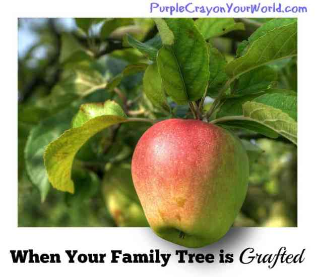 graftedfamilyappletree