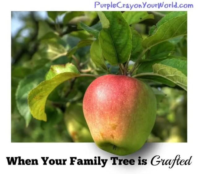 graftedfamilyappletree