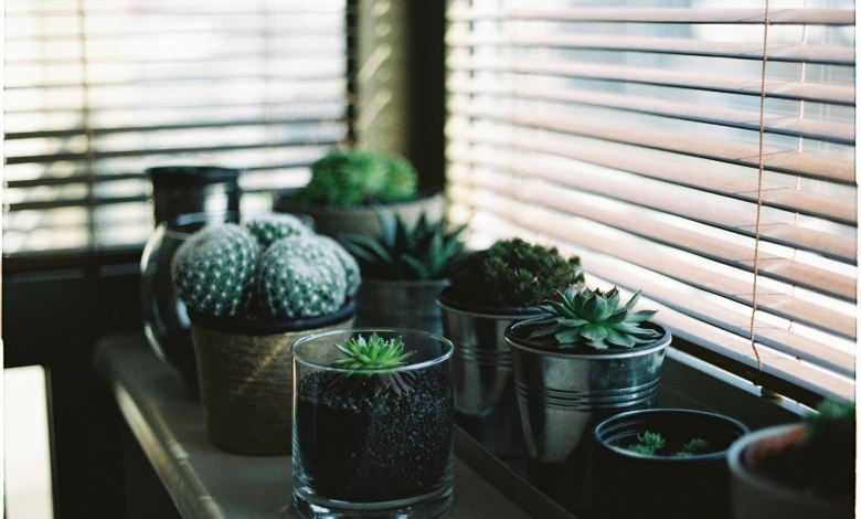 Photo of How to Start a Garden in Your Apartment
