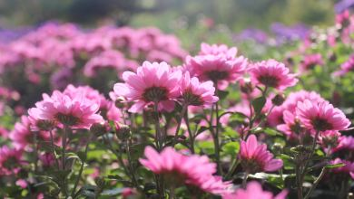 Photo of Best Flowers for the Beginning Gardener