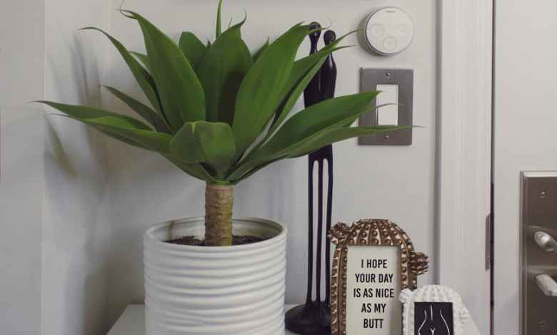 Photo of How to Care for Indoor Tropical Plants