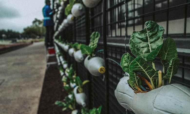 Photo of The Best Plants To Grow In Your Vertical Garden