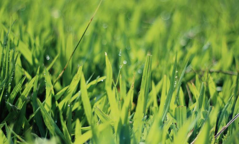 Photo of 8 Ways to Use Grass Clippings