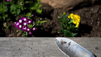 Photo of Essential Tips That Every Gardener Should Know