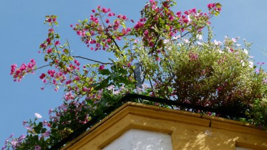 Photo of How to Create Your Own Rooftop Garden