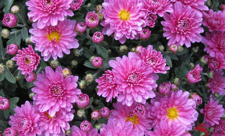 Photo of Best Annual Flowers to Plant Each Year