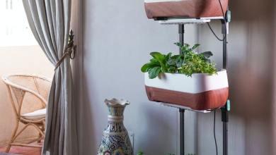 Photo of How to Build an Indoor Vertical Vegetable Garden